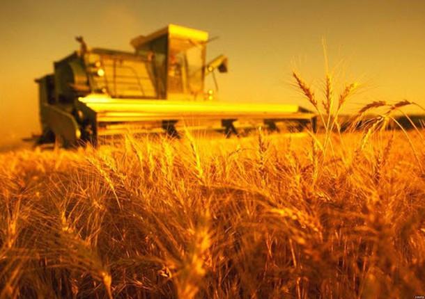 Фермерам Новороссийска могут помочь