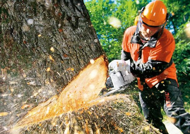 В Приморском районе идет вырубка леса