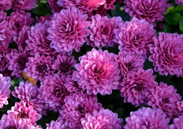 В Центральном районе пройдут ярмарки живых цветов